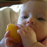 Willow, 6 months, gnaws a  juicy peach.